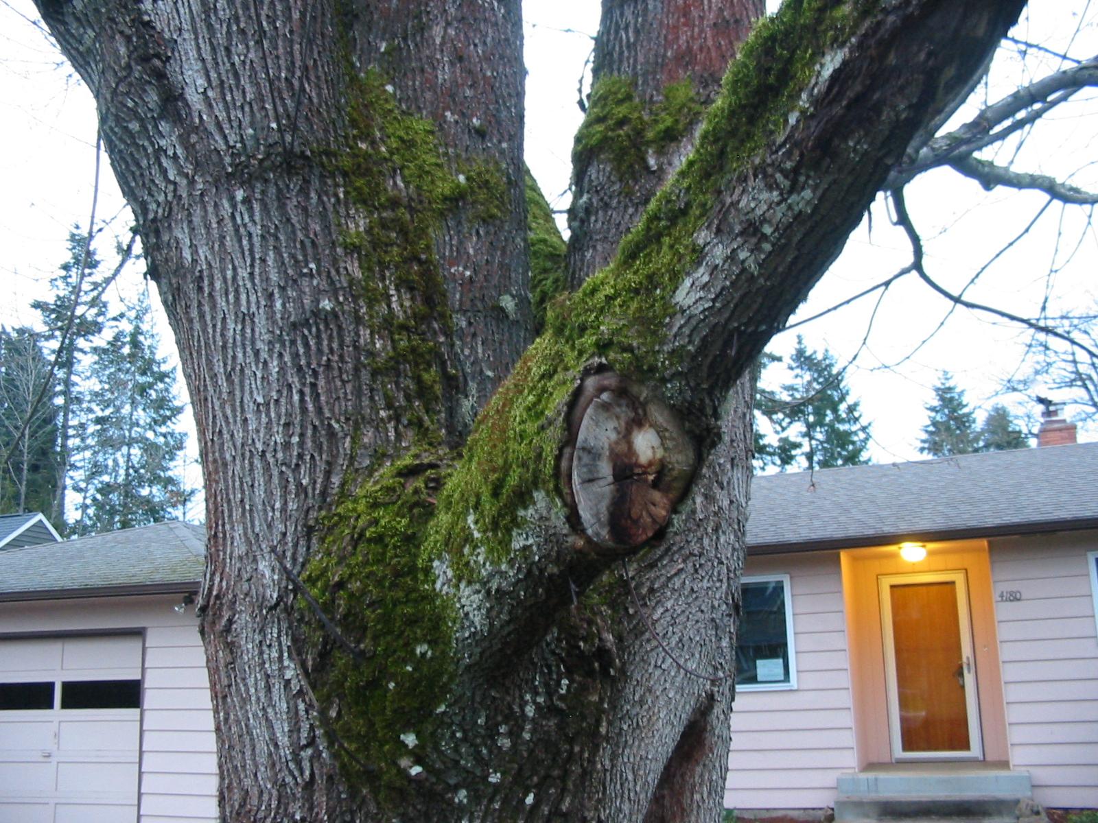 http://www.keithl.com/tree2.jpg